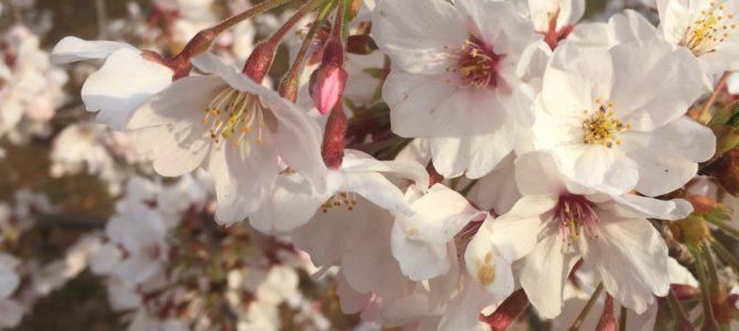 ようこそ、春。